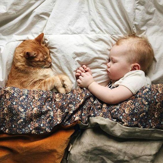 Vivere con un gatto sin da bambini per prevenire l'asma