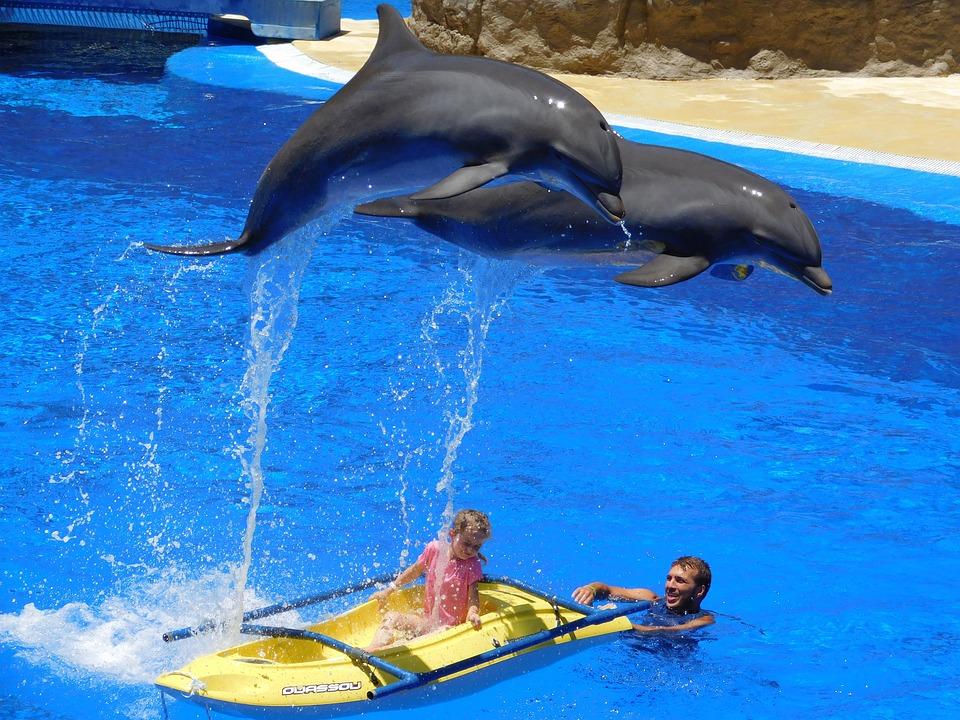 libera al bagno con i delfini: la protesta degli animalisti