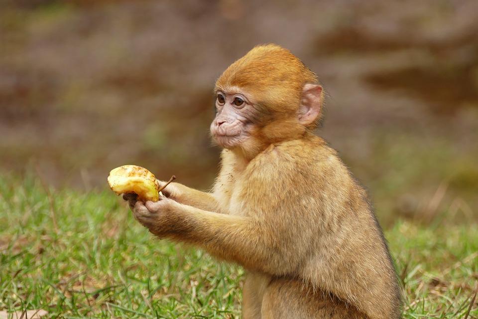 Fumi di scarichi diesel testati su scimmie. Accusate case automobilistiche